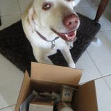 Sevin is so happy we had to post. Allivet added arcBark chews and goodies. She says THANK YOU!