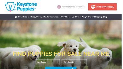Keystonepuppies.com