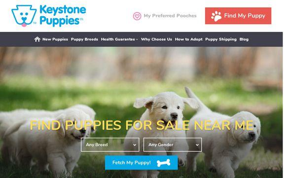 Keystone Puppies
